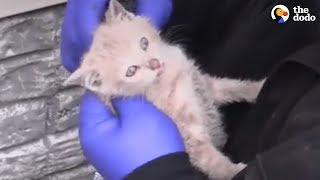 Baby Animals Rescued At The Perfect Time   The Dodo Best Of
