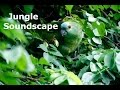 Download Heart of the Jungle | 3 Hour Rainforest Soundscape | Nature sounds and Jungle Ambience MP3 song and Music Video