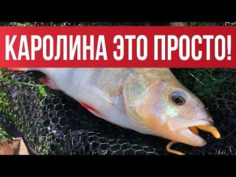 Как ловить на каролину (Carolina Rig) ? Простые советы. Теория и практика   Рыбалка с Fishingsib