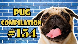 Pug Compilation 154  Funny Dogs but only Pug Videos | Instapug
