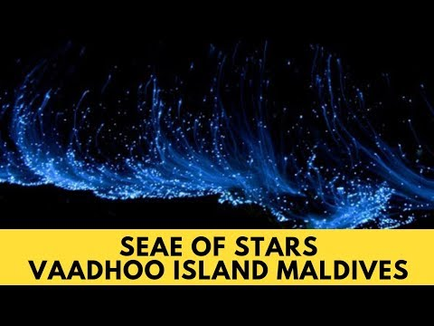 0 - Sea Of Stars Vaadhoo Island, Maldives