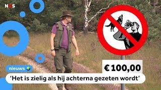 Boswachters: laat de wolven met rust