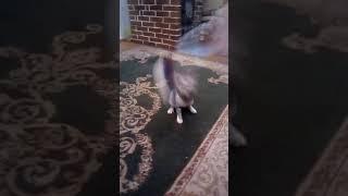 Моя кошка ненавидит Россию