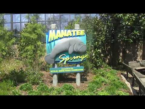 Cincinnati Zoo and Botanical Garden. Video 13 (Manatee Springs)