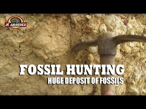 Fossil Hunting - Huge Deposit Of Fossils