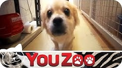 Die Tierfänger - Versorgung ausgesetzter/entlaufener Tiere │YouZoo