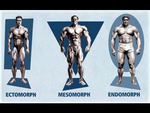 Que tipo de Cuerpo tengo | Endomorfo, Ectomorfo y Mesomorfo | Somatotipos | Gym