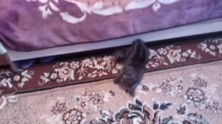 Кот и зонт