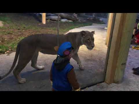 Zoo Boo 2018 At The Erie Zoo In Erie, PA