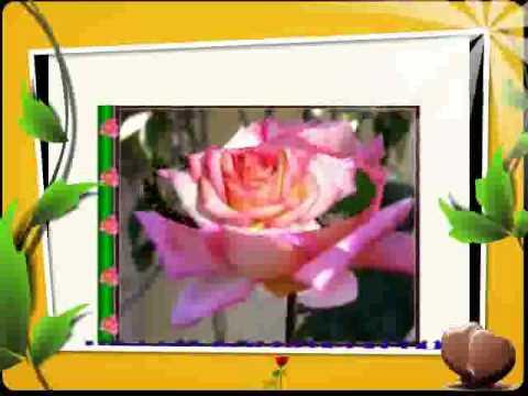 abum các loài hoa.mp4