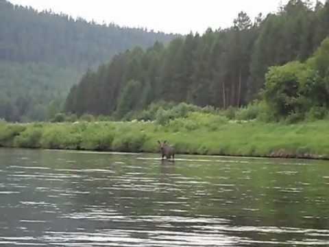 рыбалка в верховье илима