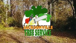 Jacksonville Tree Service | Tree Trimming, Tree Removal, Arborist Care In Jacksonville Florida