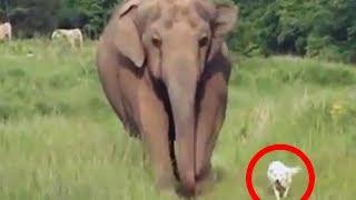 Dieser Elefant geht immer zu der gleichen Stelle - Du wirst nicht glauben auf wen er dort wartet...