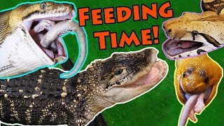 Feeding our BIG Reptiles!