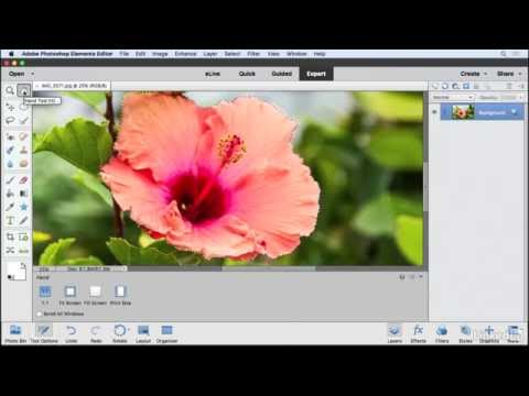 Using the Refine Selection brush  | Learning Photoshop Elements 15 | Lynda.com from LinkedIn