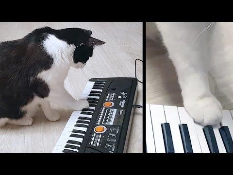 True Virtuoso