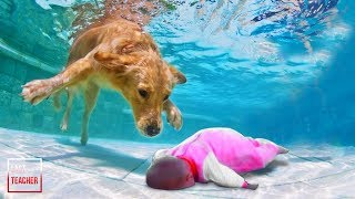 Lihatlah Aksi Anjing ini Menyelamatkan BAYI Tuannya, Sesuatu Tak Terduga Terjadi !