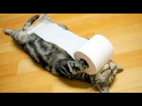 Gatos Chistosos ❤ rompiendo papel Higienico 2016 ヅ ❋ Videos De Risa Chistosos