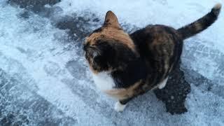 Встретили пятнистую ласковую милашку, кошку