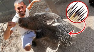 My FIRST PORCUPINE! Should I get one?