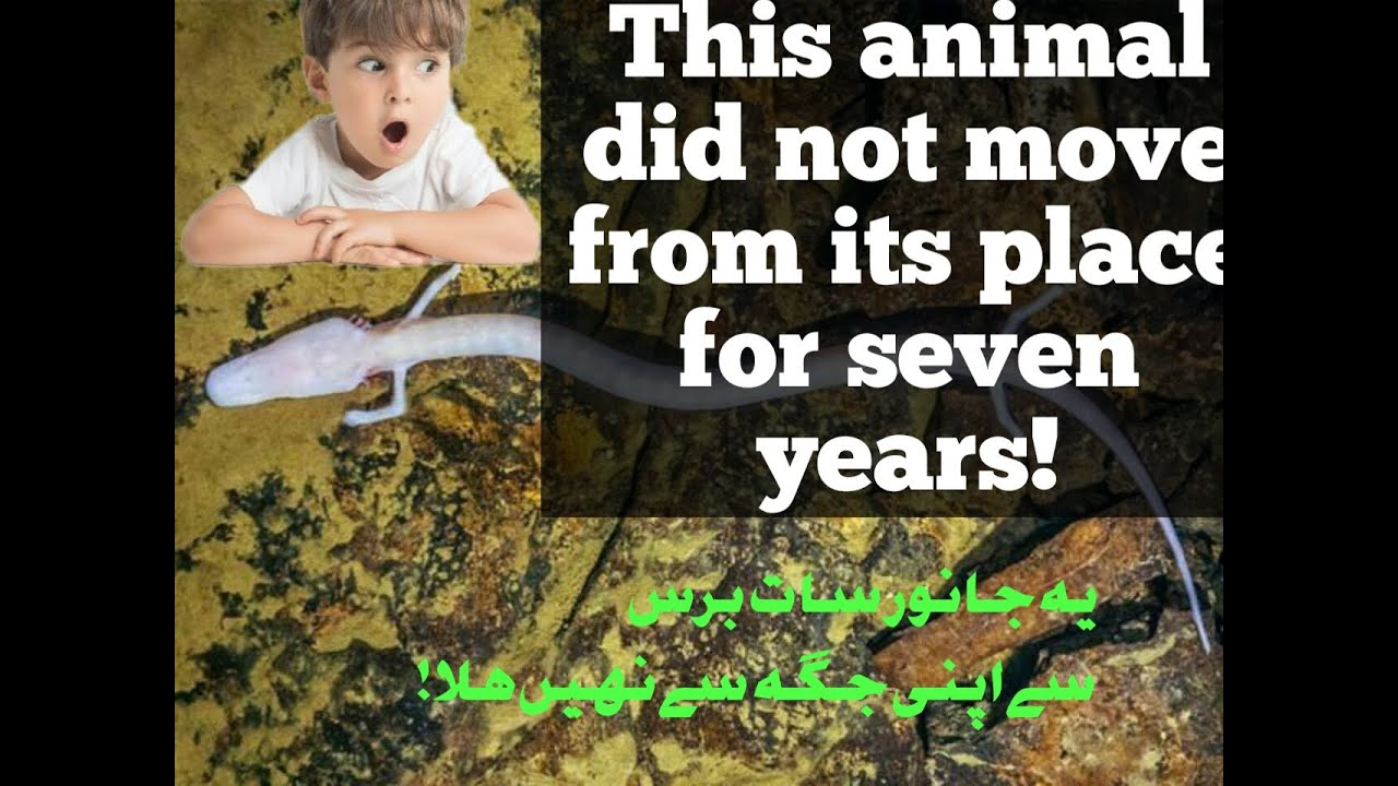 OLAM | ANIMAL  not MOVE from its place for seven years! MyTub.uz