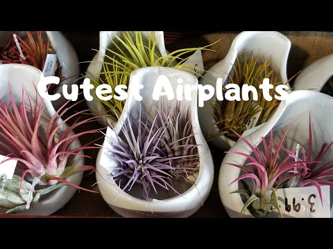 Cutest and Colorful Airplants