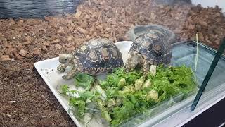 거북이 옴뇸뇸