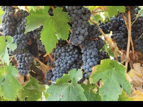 What's to Become of San Joaquin Valley Wine?