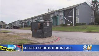 Dallas Police Searching For Suspect Who Shot Children's Dog In Face