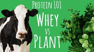 Whey Versus Plant Protein