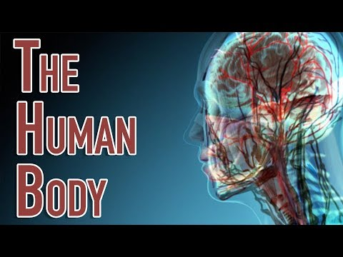 The Human Body | Facts About the Parts of the Human Body Sys