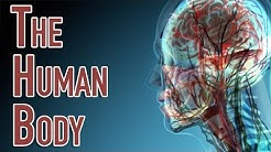 The Human Body | Facts About the Parts of the Human Body System