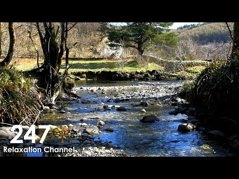 Relaxing Nature Sounds With Gentle Piano Music ( River, Birds Singing )