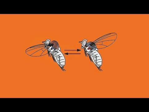 Michael Dickinson: How a fly flies