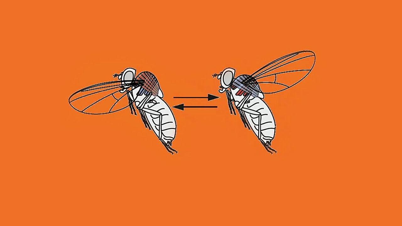 a rovar paraziták jelentése