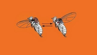 Michael Dickinson: How a fly flies thumbnail