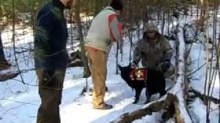 Search And Rescue Dogs Train In Hopkinton