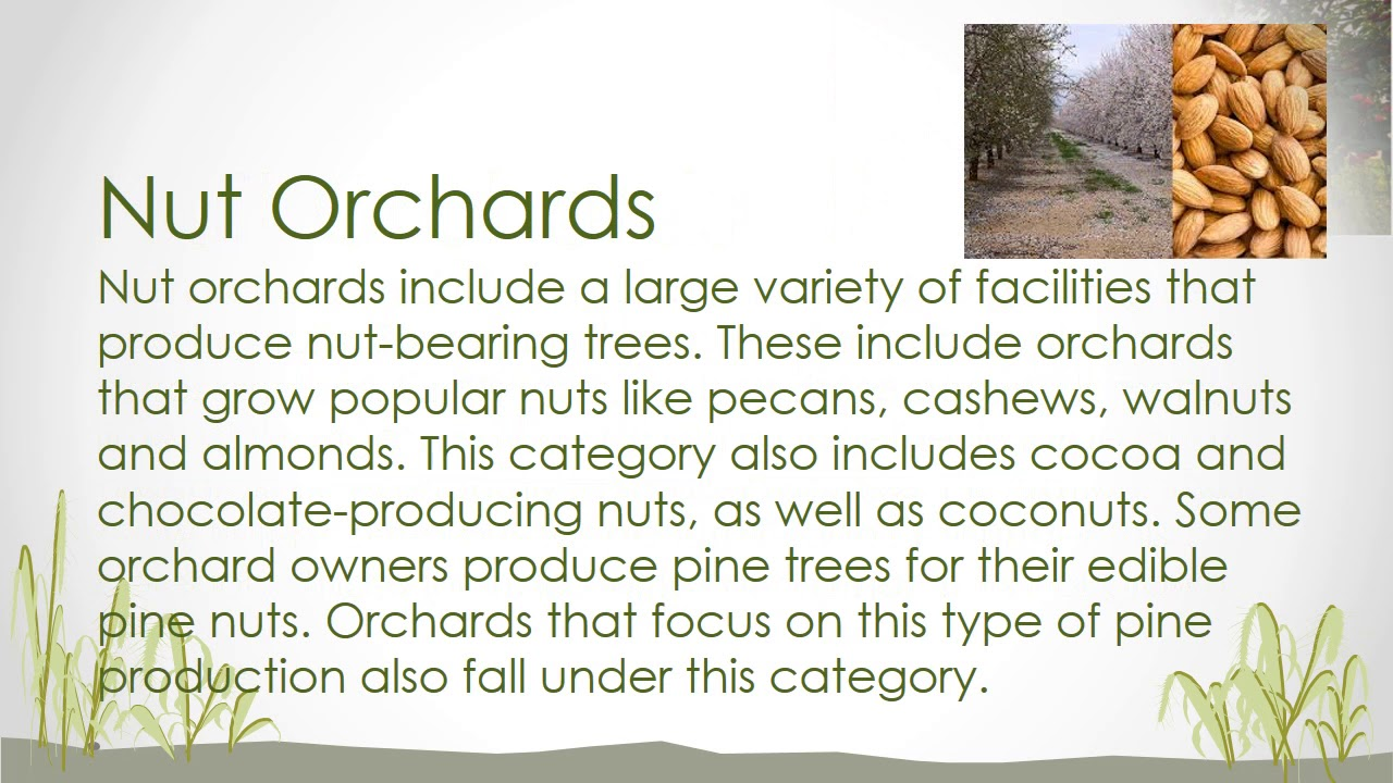Aa Tle Session 6 Types Of Orchards Farms You