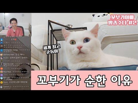 꼬부기가 세계 최고 순둥이 고양이가 된 이유 - 방종수다 #2