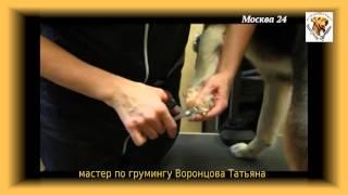 THOR - Как правильно мыть собаку? - метис бордер-колли.