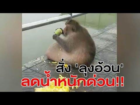タイでとんでもないサルが発見される。
