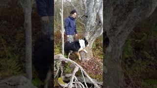 Border Collie learning Tarzan