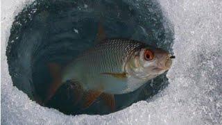Ловля плотвы и окуня зимой Зимняя рыбалка на мормышку и балансир