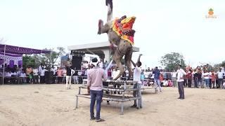 New Marwadi Dance 2018   New dj song 2018   Marwadi camel Dance