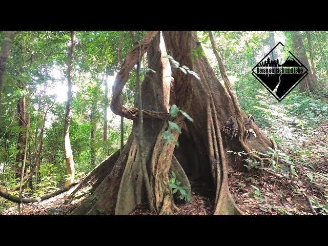 Die 8.000 Stufen des Gunung Raya • Vlog #64