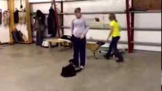 Hattie Giant Schnauzer Obedience For Sale Protectiondogsales.com