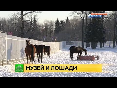 ОАО Гурьевский металлургический завод