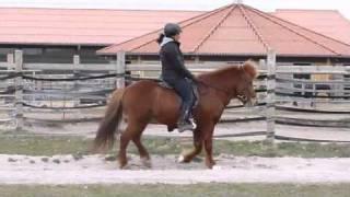 2011-04-01- Bingo vom Vossbarg und seine Reiterin Suzan Beuk-Desktop.m4v