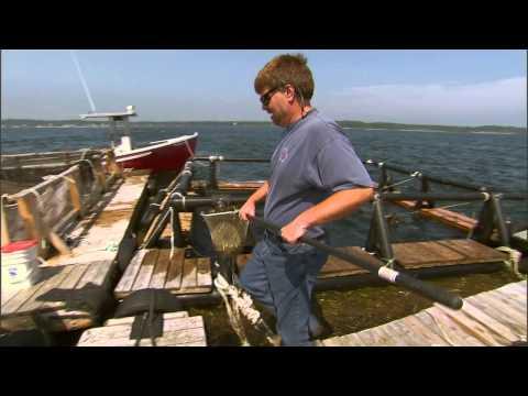 Marine Aquaculture: A Promising Future