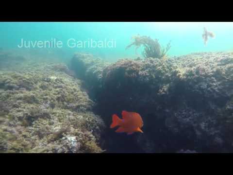 SoCal Fish Identification Laguna Beach